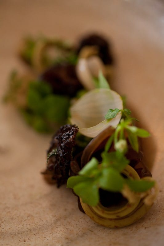 Organic grains with pickled mushrooms