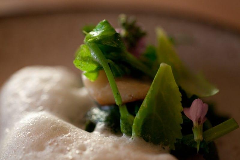 Quinault razor clams with wild beach peas