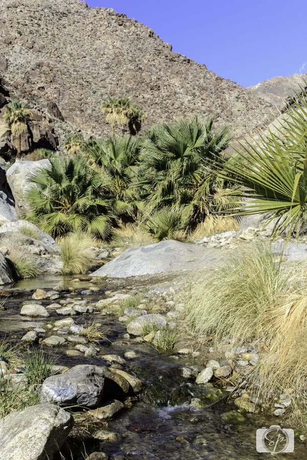 Seven Things to Do in the Anza-Borrego Desert State Park -hike-Palm-Canyon-Trail
