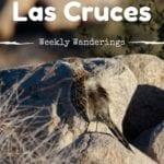 Weekly Wanderings #4 – Las Cruces