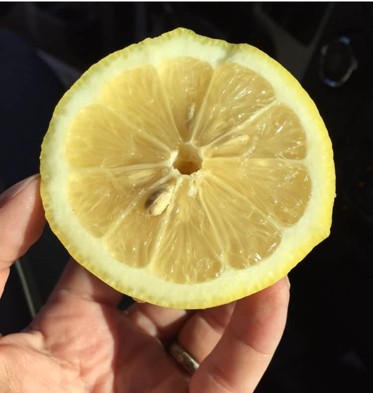 seley-ranch-lemon-cut