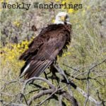 Weekly Wanderings #9 – Gold Canyon