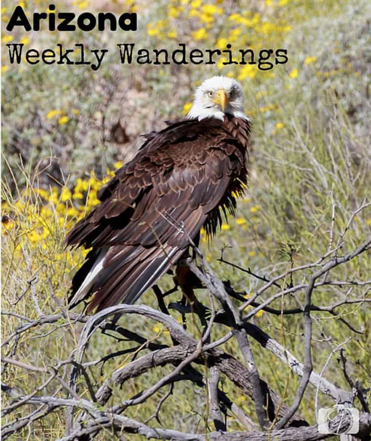 Weekly-Wanderings-Arizona