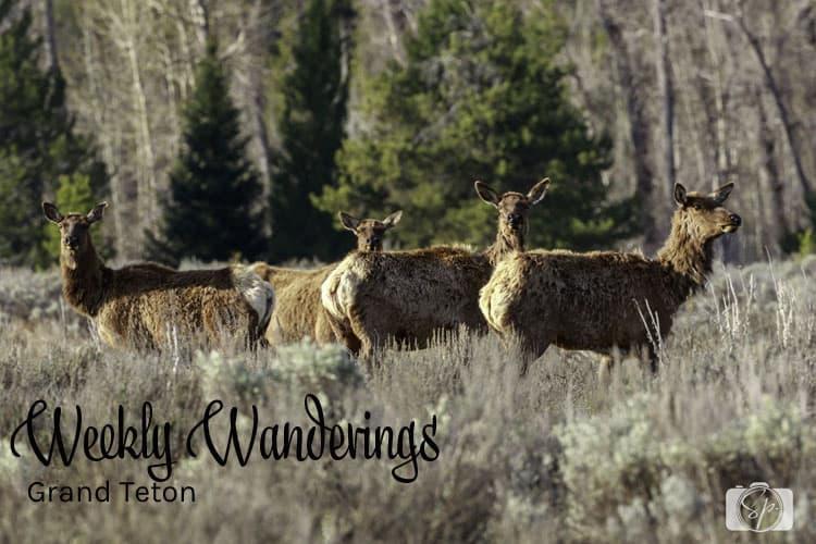 Weekly Wanderings Grand Teton