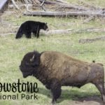 Yellowstone National Park (Part 1)