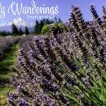 Weekly Wanderings #30 – Portland