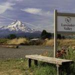 Locals I Love – Lavender Valley Farm