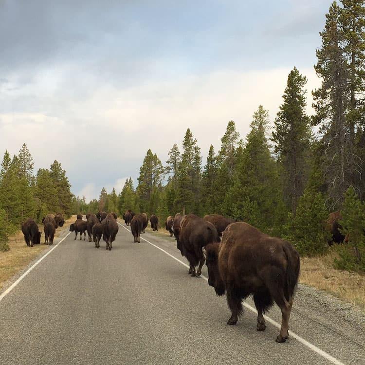 bison-commute