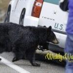 Weekly Wanderings #36 – Yellowstone
