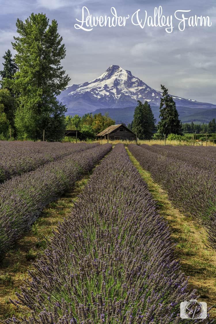 lavander valley farm