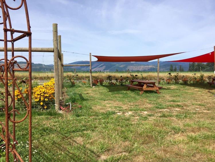 lavender valley picnic